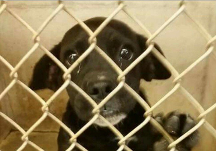 Big Spring #TX URGENT #Lab x #pup euth list today (tues 11th) share sweet baby https://t.co/7cdP5bi6s3 https://t.co/WBxUnWyyBf