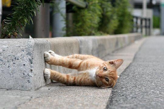 ずっる、なにこれずっる。: 渋谷区 神宮前のねこ https://t.co/AGQBlN2KGR https://t.co/SXEiDLak0i