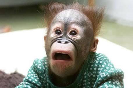 何気なくフォロワーさんのページ開いたら、期待以上のイケメンが出てきた時の私の顔。 https://t.co/CTVSLoy3Wm
