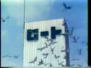 鳥がロート製薬みたいと思って検索したら、初代CMは「撮影のために本社屋上の鳩舎にたくさんのハトを飼い、担当の女子社員が毎日、手のひらにエサをのせて養育。撮影条件のよい、雨上がりや台風一過のあとを待つために半年がかりで撮影」という知識を得た。