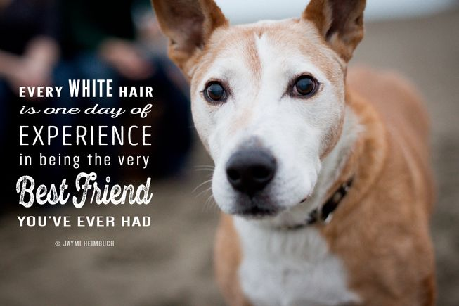 Here are a few good reasons to adopt an older #dog from a shelter https://t.co/FwEPhrZnKM #seniorpets https://t.co/Tlbm80a6Eb