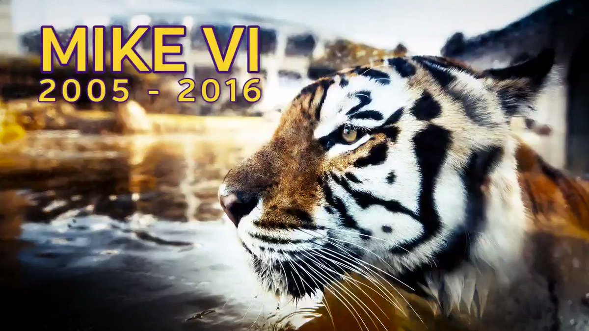 Rest in peace, #MikeVI  https://t.co/JL9stSeHiQ https://t.co/ddPSXZAwea