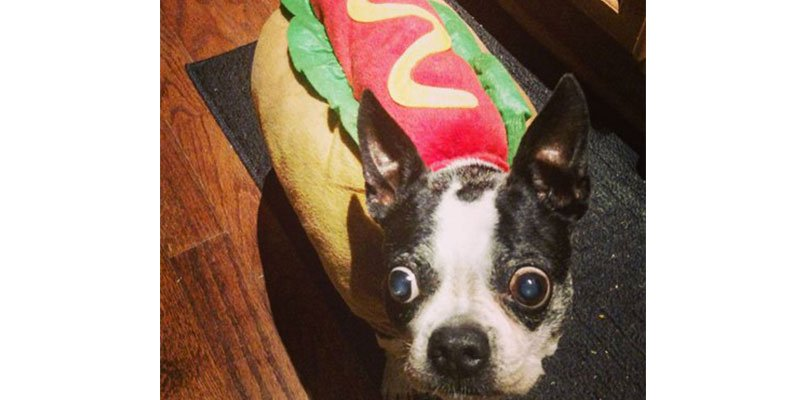 15 pet Halloween costumes that are making us hungry via @PEOPLEPets