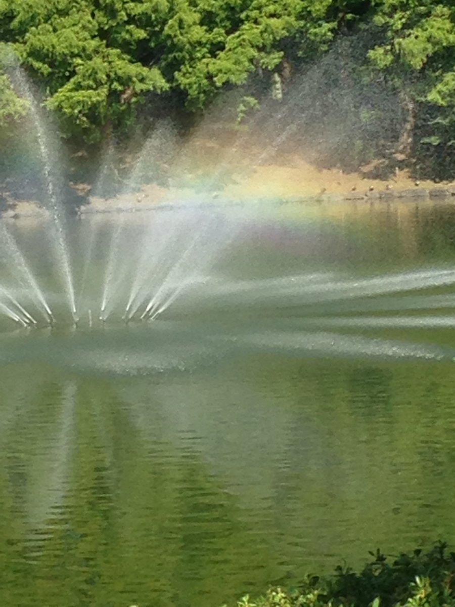 虹を見ると追いかけたくなるのは蟲師のせい