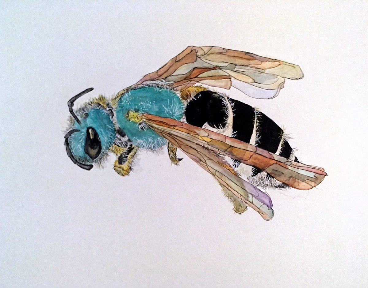 Agaposyermon coloradinus #watercolor #gouache https://t.co/J0LeSnkm9n