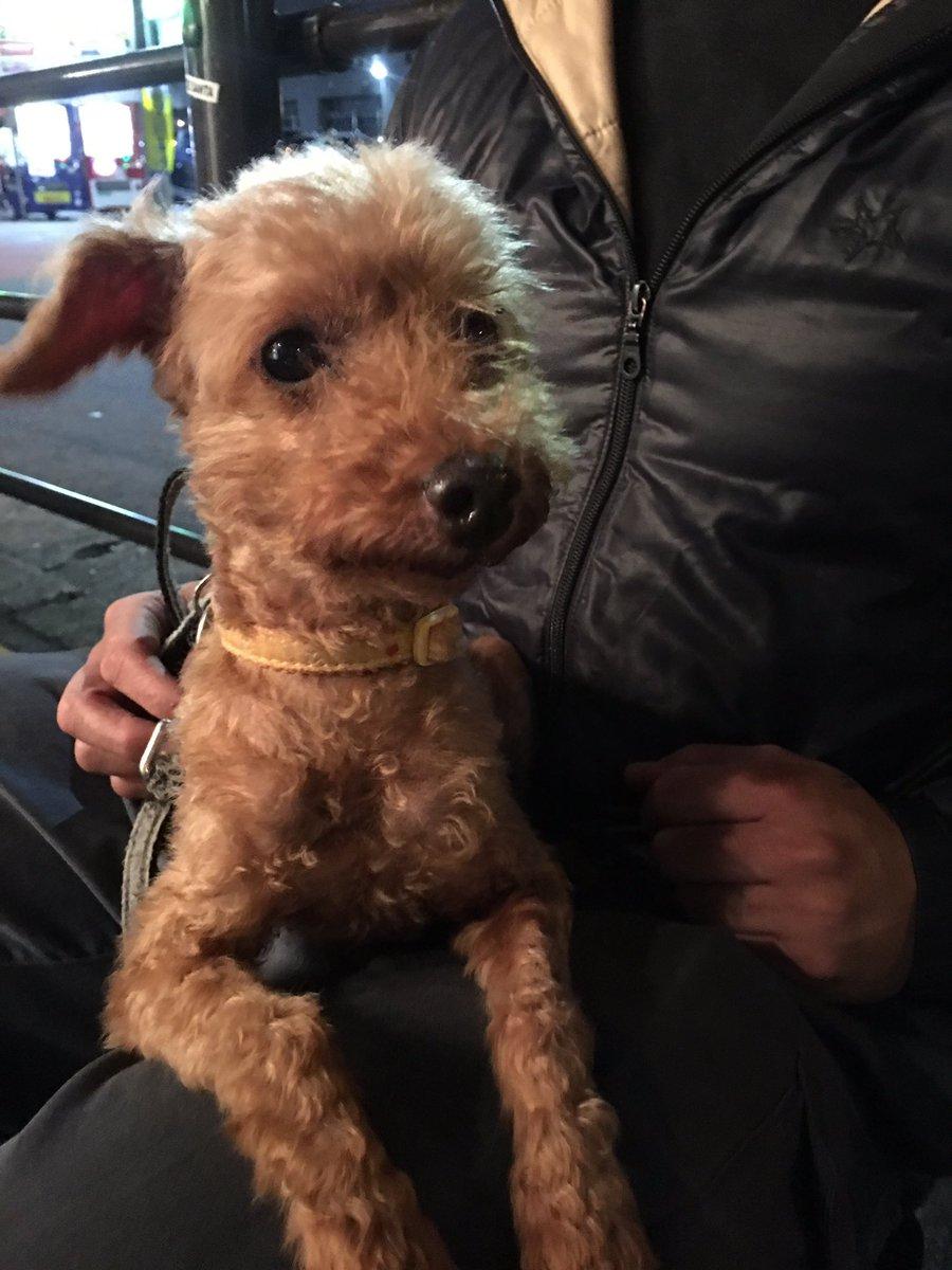 9月28日大阪府堺市大仙西町2丁の交差点で迷子犬を保護しました 警察署に届けましたが飼い主様の連絡がなくこのままだと保健所いきになるので一旦預かっています。 心あたりのある方か飼い主様ご連絡下さい。 06-6599-8838(サロンBONITO内、落合まで)
