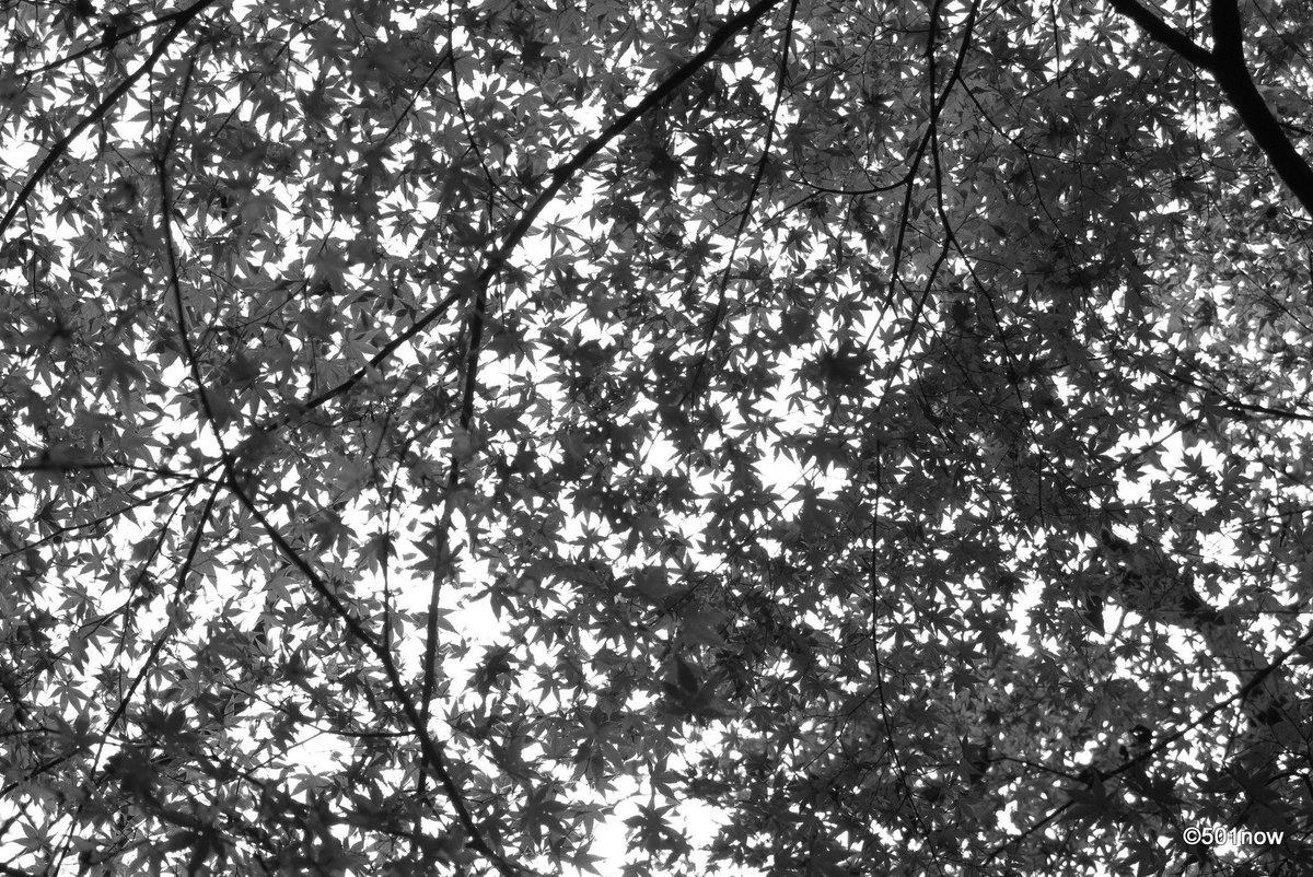 @501now: 『秋の空』#写真撮ってる人と繋がりたい#写真好きな人と繋がりたい#ファインダー越しの私の世界#写真 #