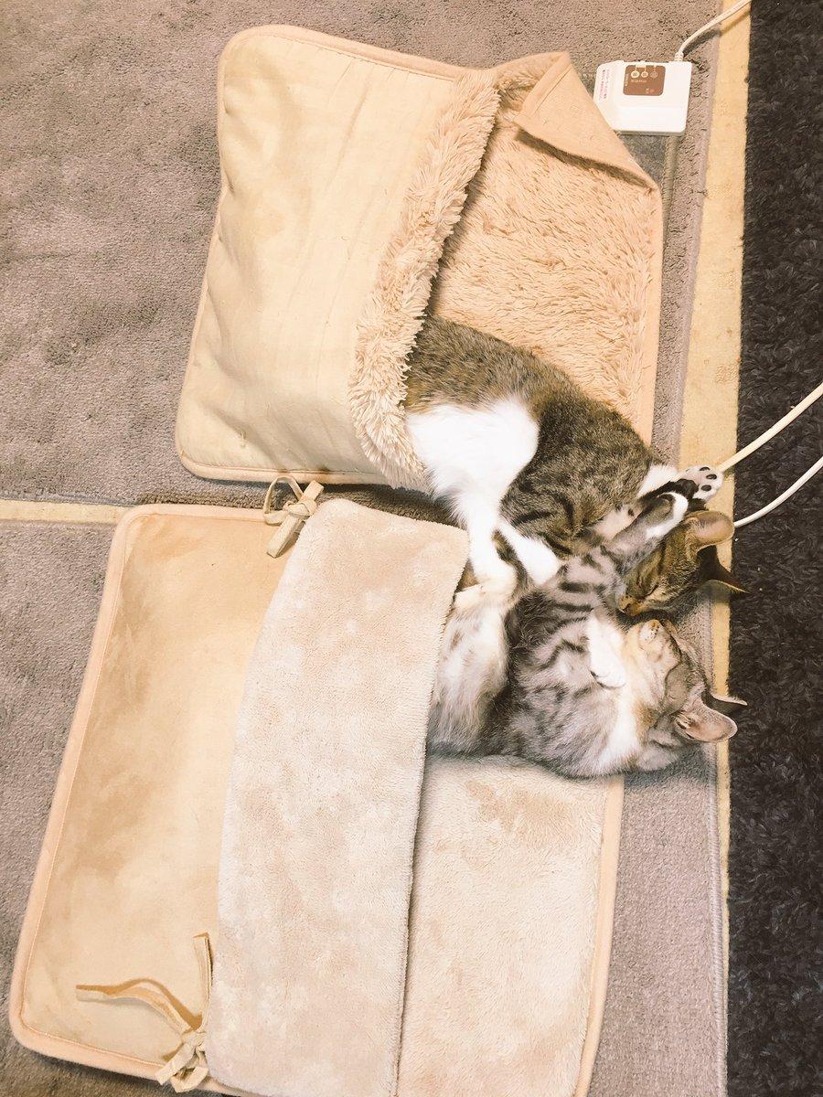 「猫用ホットカーペットを増設しました」
