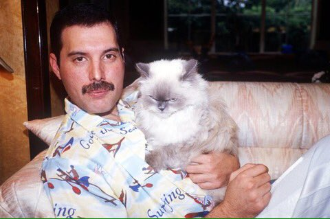 Bookmark this pic of Freddie Mercury and his cat Tiffany for if/when news gets too depressing today. https://t.co/ZmhZcnaqG6