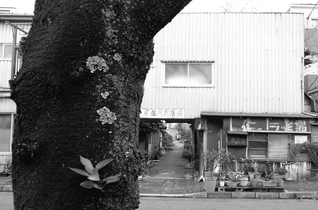 ディープな世界に連れていってもらいました! 昭和の風情木根川商店街…桜の木とともに花びらが舞い散る風景もいい感じだろうな