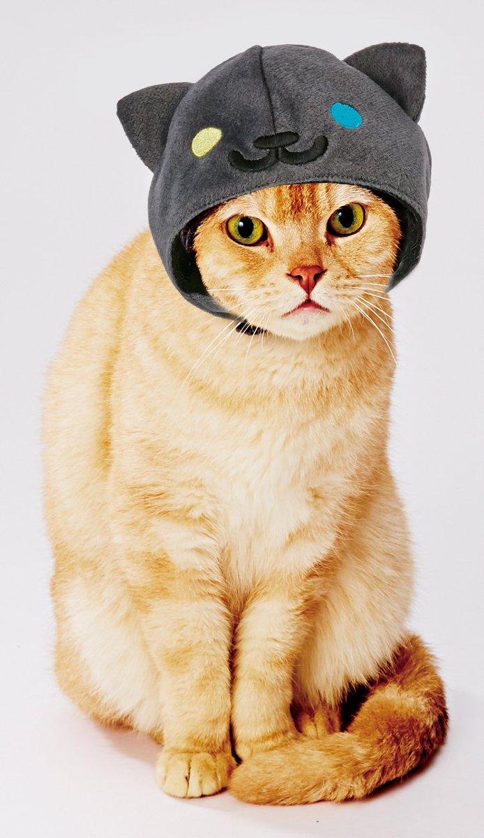 ねこあつめの世界をおうちで再現できる、猫用グッズが新登場。これからの季節にもってこいの、もこもこなひつじクッションも発売中です。詳しくはこちらから petio.com/nekoatsume/