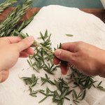 When Is It Okay to Use Dried Herbs?