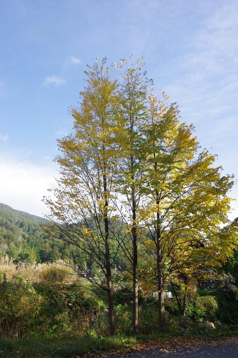秋ですね。  甘い香りを楽しませてくれる桂の葉も落ち始めました。ラウンジからの景色は、夏とはまた違った表情を見せてくれています。ご旅行のついでに、ぜひお立ち寄りくださいませ。 https://t.co/QKKlgLJcMw
