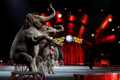 In Opinion: Cruelty to circus animals is not entertainment