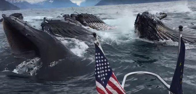 Lucky Fisherman Watches Humpback Whales Feed  https://t.co/rtbKPTlzHF  #fishing #fisherman #whales #humpback https://t.co/P5yMvRCntP
