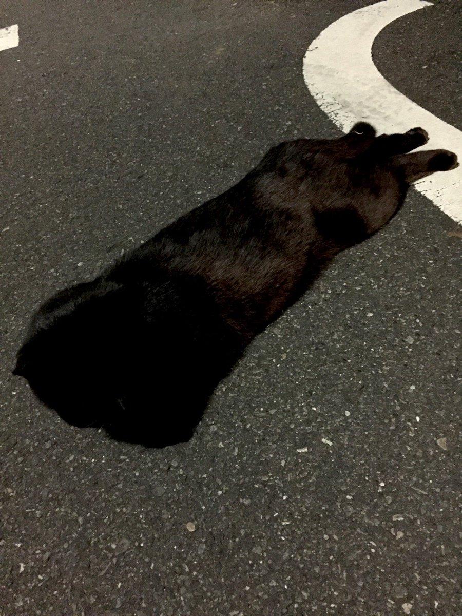 近所の猫。 https://t.co/UHdIi74AJV