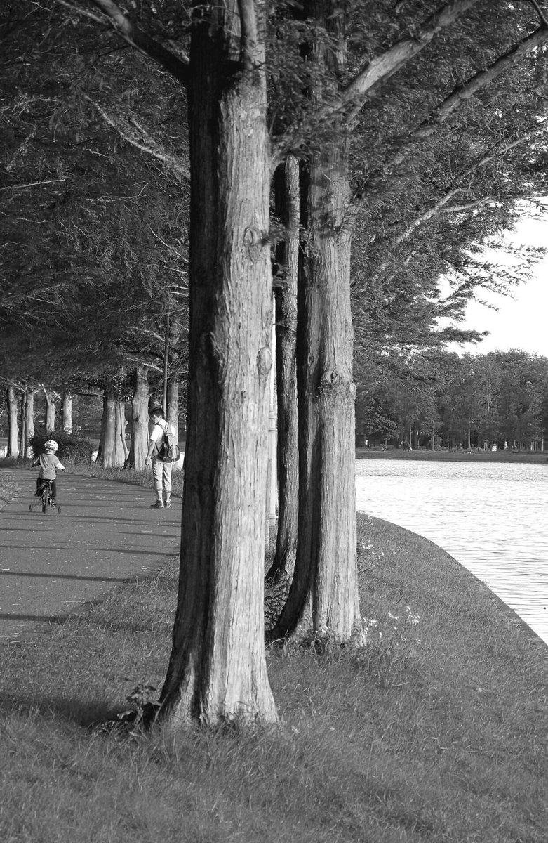 初夏の頃~カメラ持って出かけたいわ!#ファインダー越しの私の世界 #東京の風景 #pentaxks2 #モノクローム