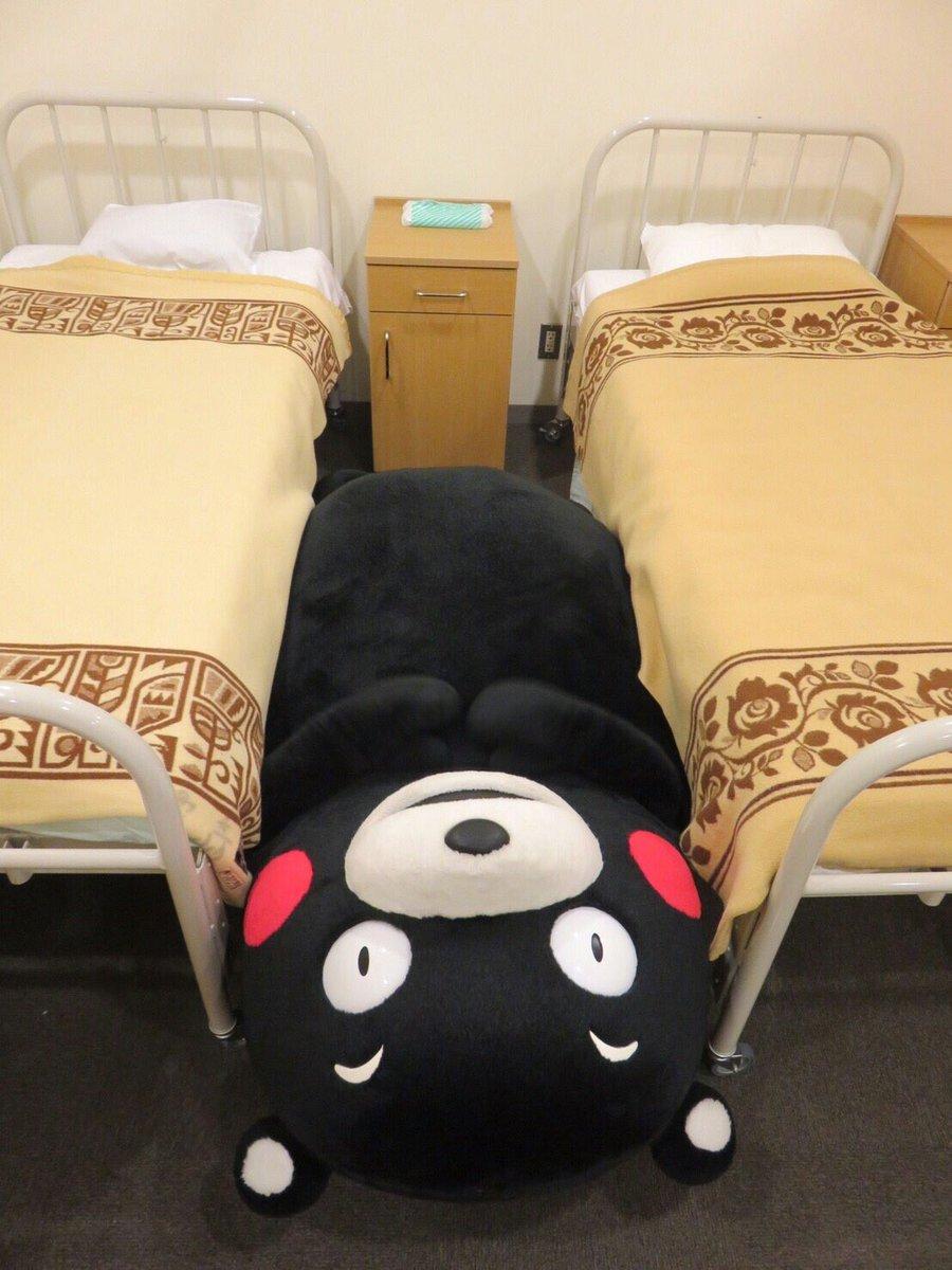 今日はここで寝るかモン。おやくま〜☆