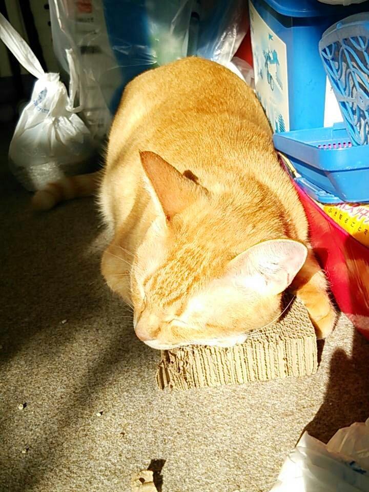 おはようございます。最近、ちょっと暑さが戻ってる感じがします(;´Д`)ニャル子さん、爪とぎ抱っこして寝てます(*´Д`