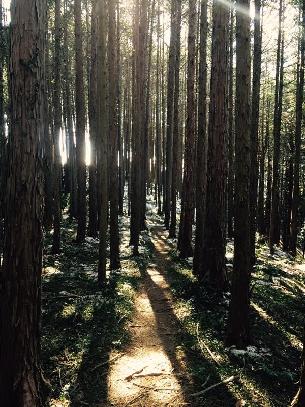 【3日前告知①】10/23(日)飯能トレラン会を開催!ヤマノススメ八十九話に登場のあさひ山展望公園コースを含む10kmを