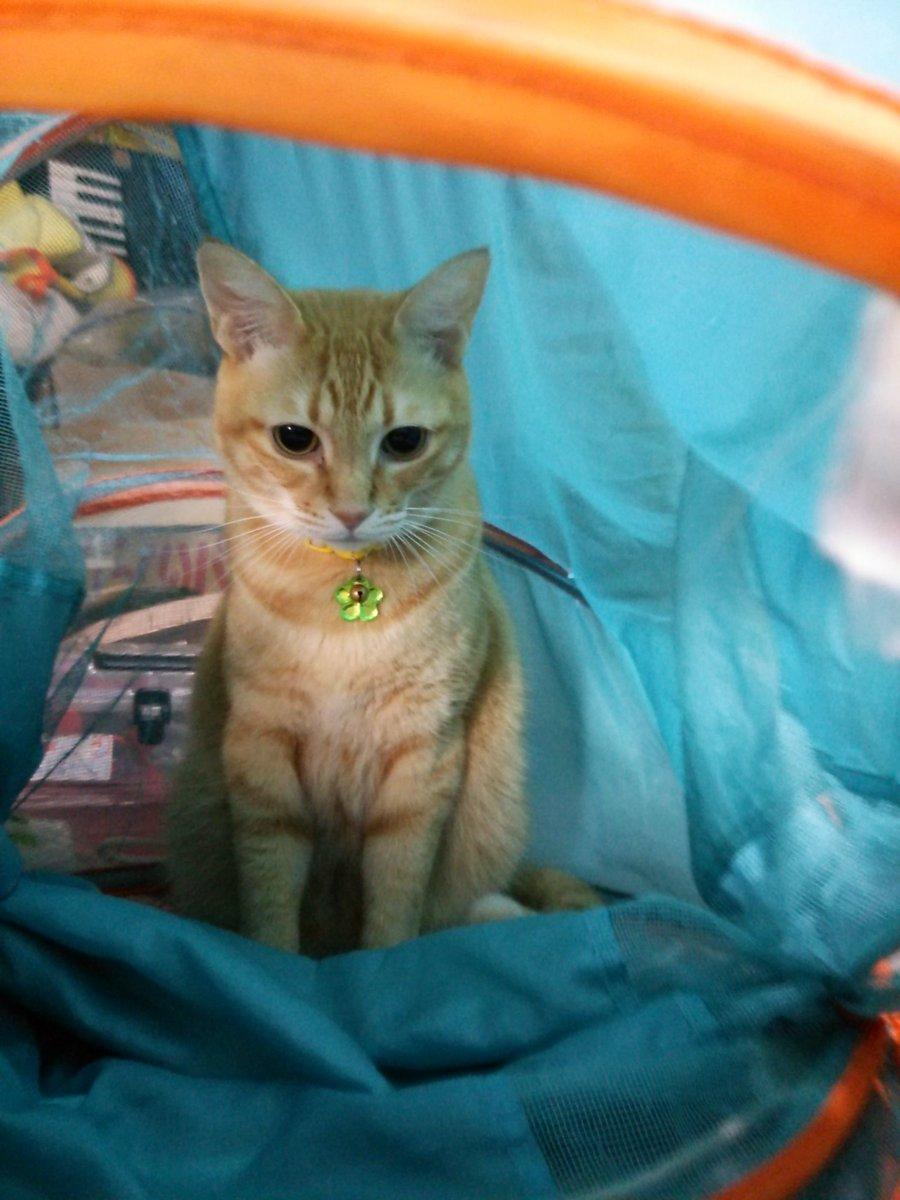 おはようございます。あっという間に、金曜日。遊んでいるうちに、ニャル子さんトンネルに籠もっちゃいました(*´Д`*)
