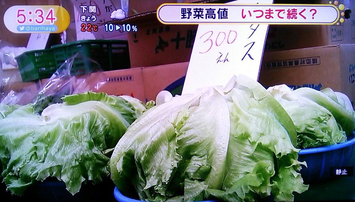 まさか去年の今頃言ったことが本当になるとは…。野菜が高い!!良くない!!#ピーピングライフ #ブラックジャック