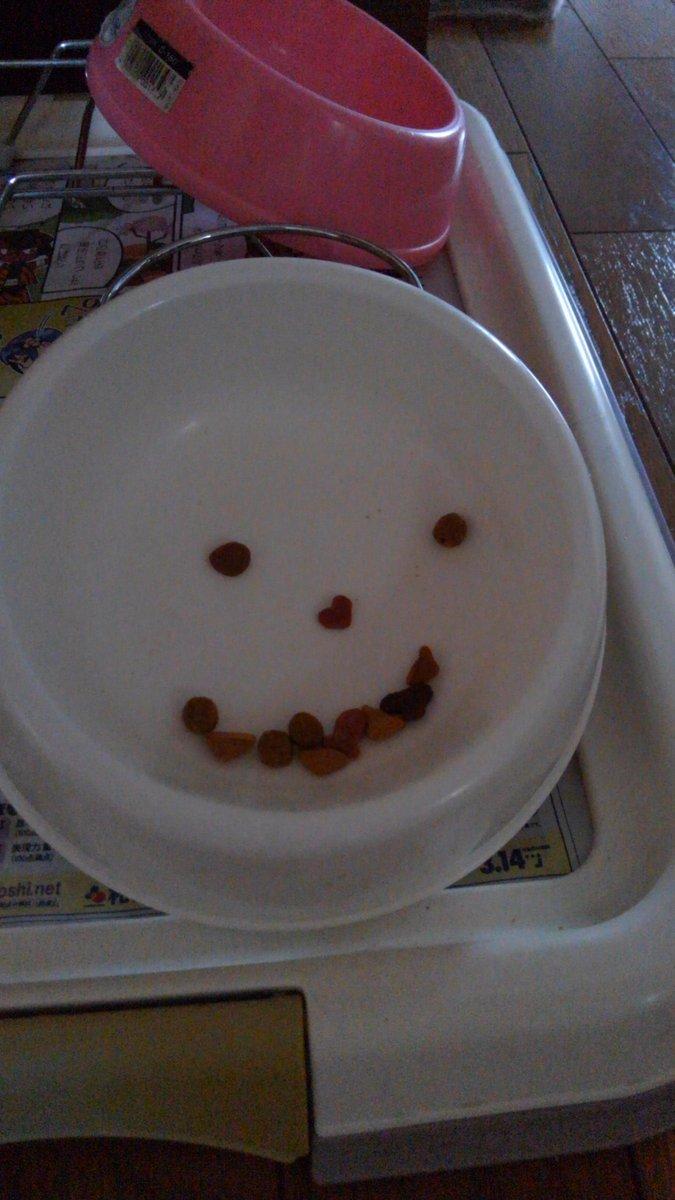 あ、猫の食べ残したキャットフードがハロウィンのカボチャランタンの顔みたい( ・∇・)