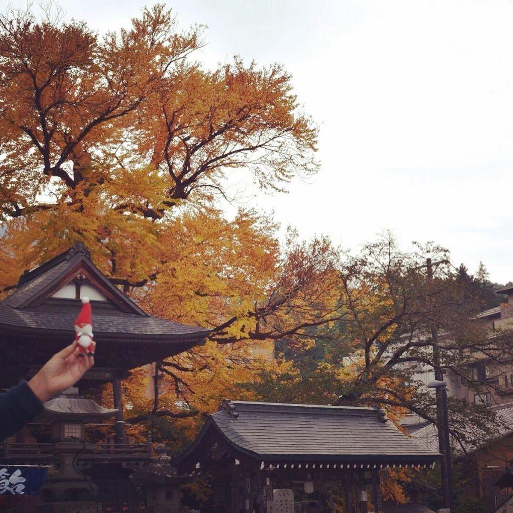 社員旅行で北向観音へ!愛染かつらと呼ばれる、とても大きなカツラの木があります。#tenori#てのり#社員旅行#北向観音