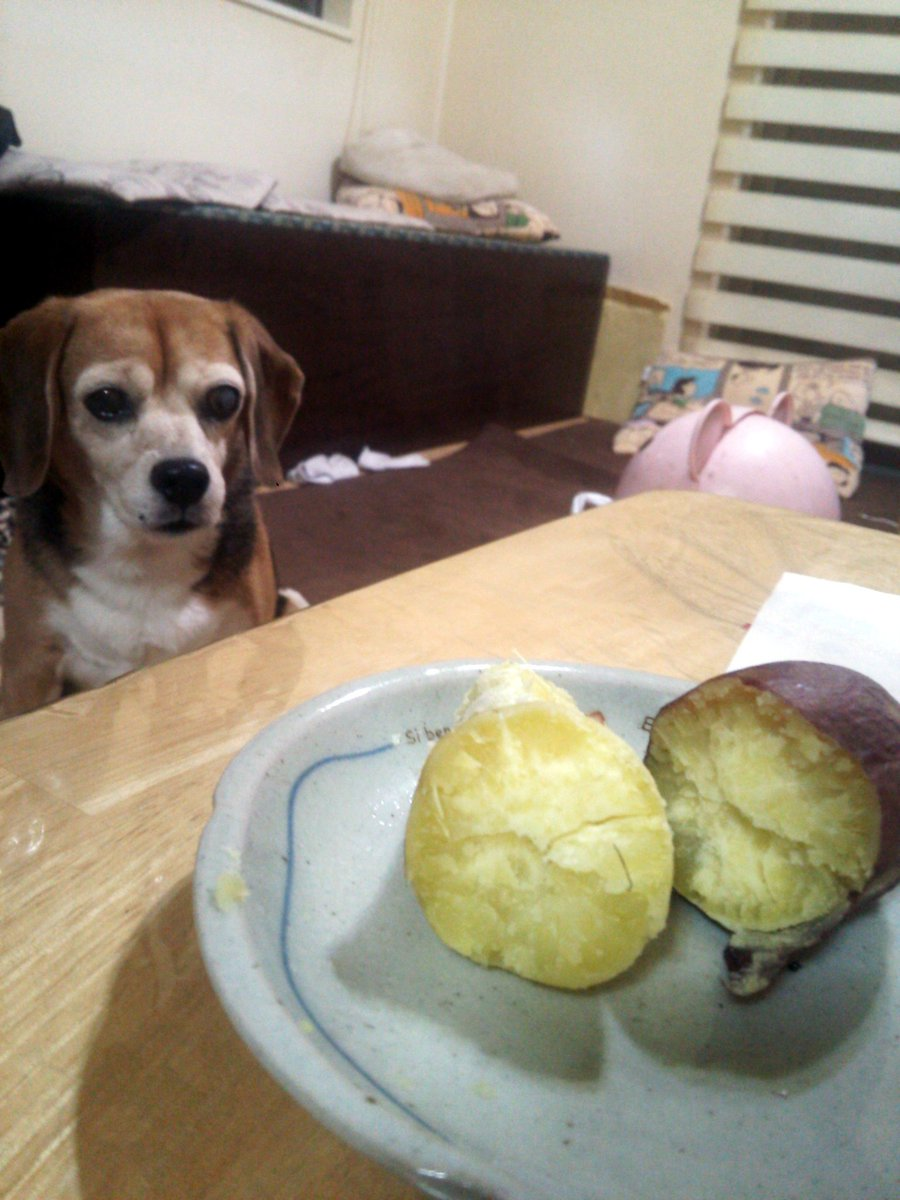 焼き芋🍠るるの焼き芋を見る目がすごい😏るるもさつまいも好きだもんねー