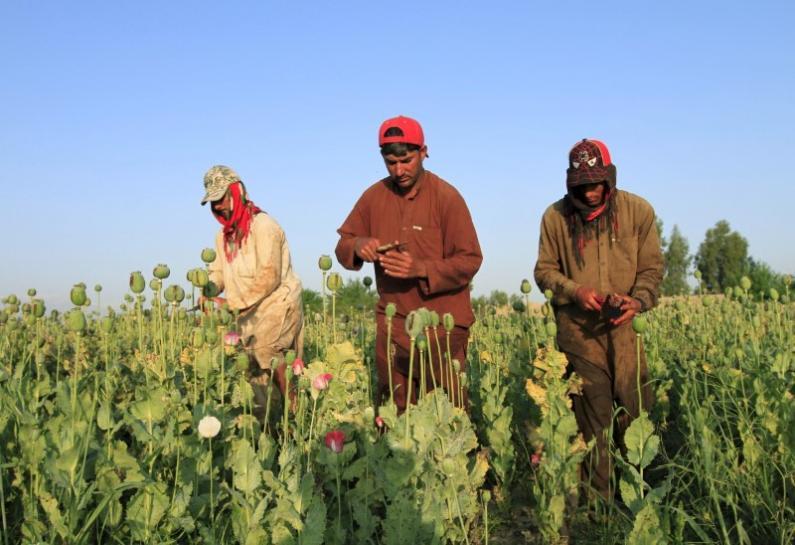 Opium crops spread in Afghanistan as Taliban gains ground, U.N. says