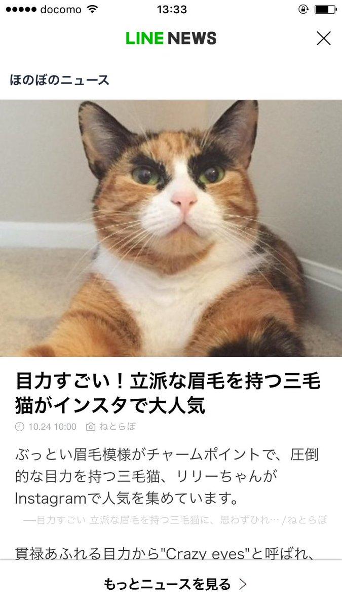インスタで話題らしい猫ちゃんぜったい鬼灯の冷徹に出演した経歴持ってる((((