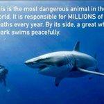 「これは世界で最も危険な動物で、毎年膨大な数の人間を殺しています。その動物の隣をホホジロザメがゆった…