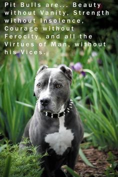 Pitbulls are angels with tails. #LoveABully https://t.co/dG4DdiJWXI