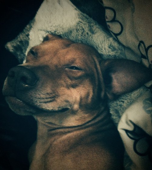 Pitbulls are no more than vicious beasts! https://t.co/8hJQbbSiL1 #cuteanimals #loveanimals #pets https://t.co/Cd9xCXlw7q