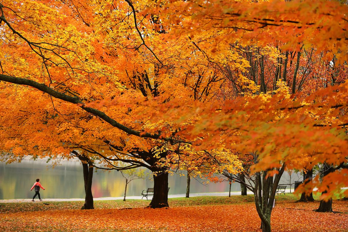 Photographers around the world capture colorful scenes of fall. https://t.co/ZMclvWKSF1 https://t.co/jeKdn2bsGm