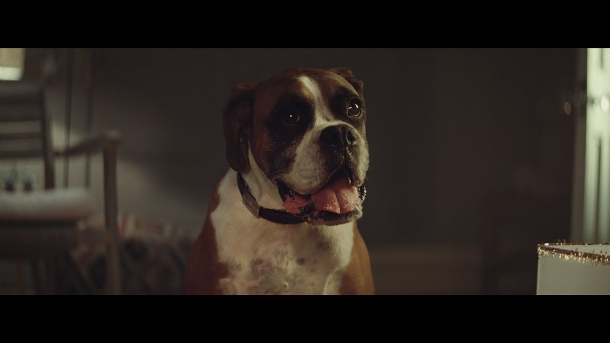 Here it is, our 2016 Christmas ad. Introducing #BusterTheBoxer > https://t.co/GjCdP6avFl https://t.co/GRMLvoHVAc