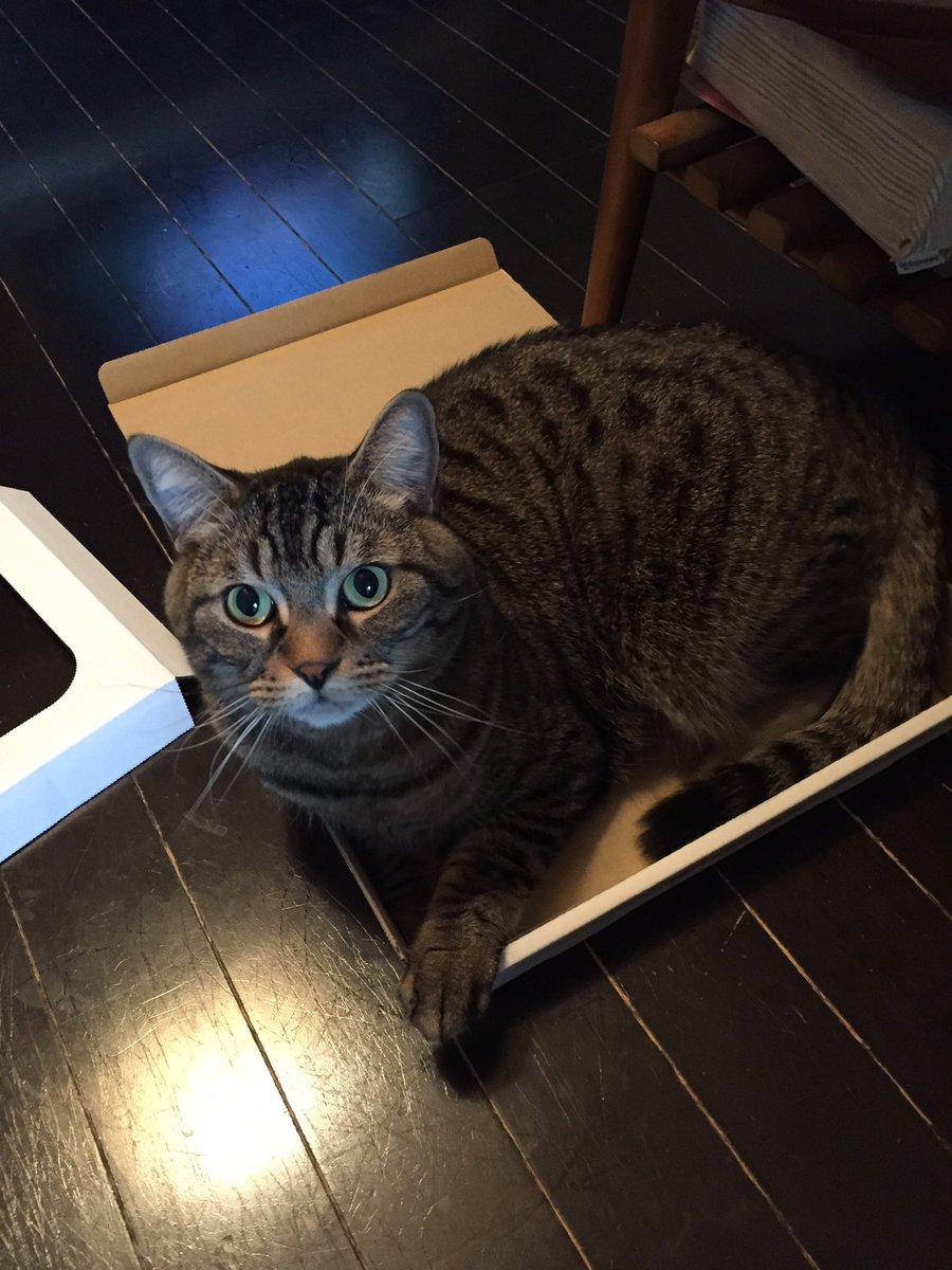 どんなサイズであろうと、そこに箱がある限り入る。絶対にだ。 https://t.co/dhq8G1jIjb
