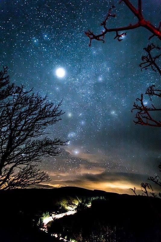 """Haiku  """"Son stelle o fiori: che splendono stanotte nel nostro cielo"""" https://t.co/woDxZJTWxN"""