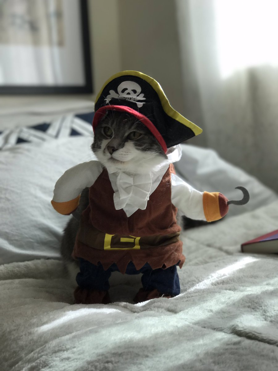 @girlposts well. My cat was dressed as a pirate. Then he fell asleep because I took forever to take the perfect shot https://t.co/6BinJAsF9c