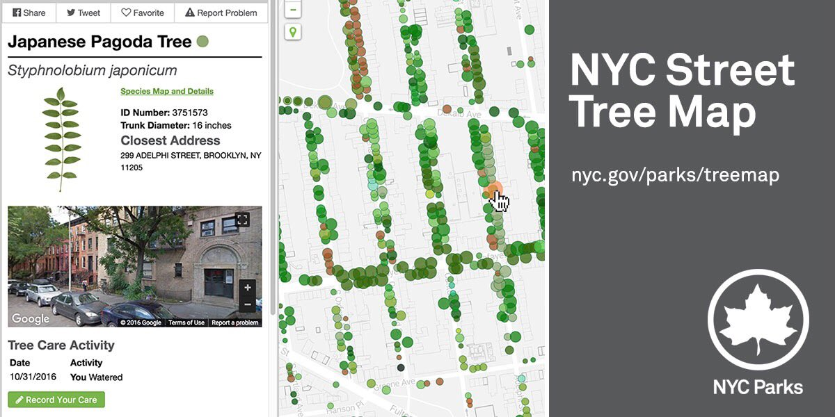 Introducing our new, interactive NYC Street Tree Map—the urban forest at your fingertips: https://t.co/2vpYhSfPBu https://t.co/brW3nJAs7s