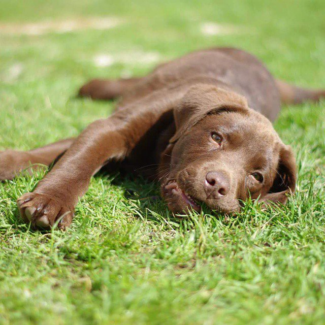 Nothing better than relaxing after a long walk! It's important for your dog's recovery and yours! https://t.co/MpkyHq6dd8