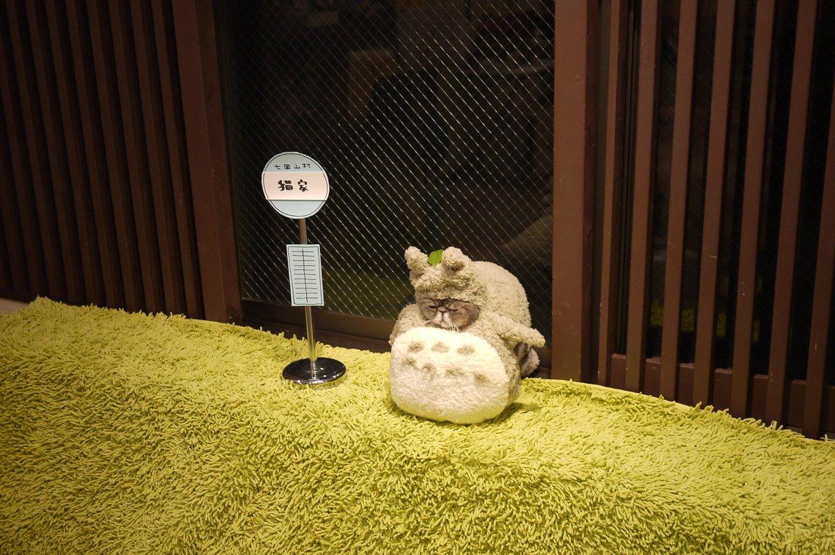 ゆっくりとバスが来た。@大宮東口  猫カフェ「猫家」のぼ爺&金太郎  #金曜ロードショー #となりのトトロ #ネコバス