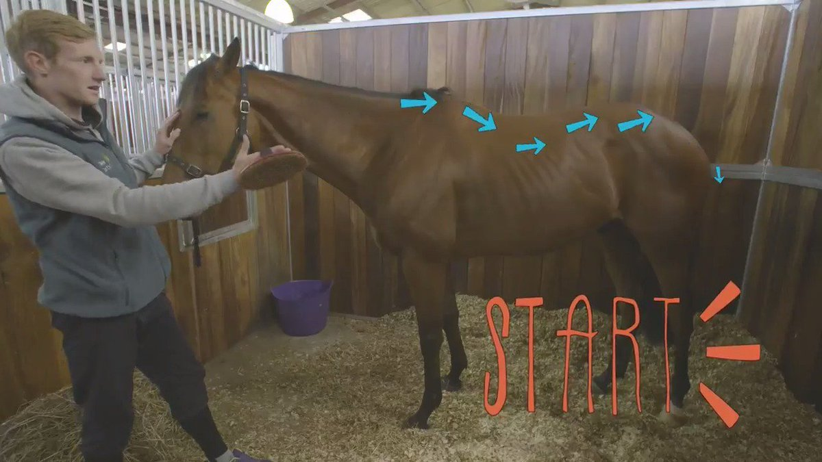 In the first of our new #HorseHowTo guides, Nick from Ben Pauling Racing shows us how to groom a #racehorse. https://t.co/Mun4rqMWVB