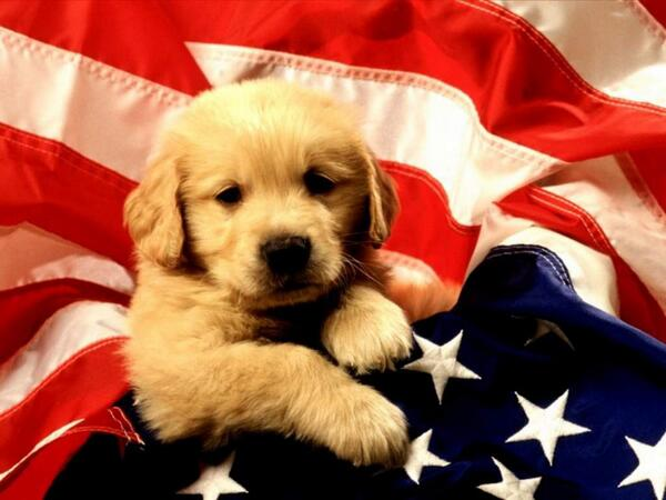 Emergency Cute Stuff @EmergencyPuppy: This puppy's reminding you to vote today! #electionday https://t.co/vNSDPxchS2