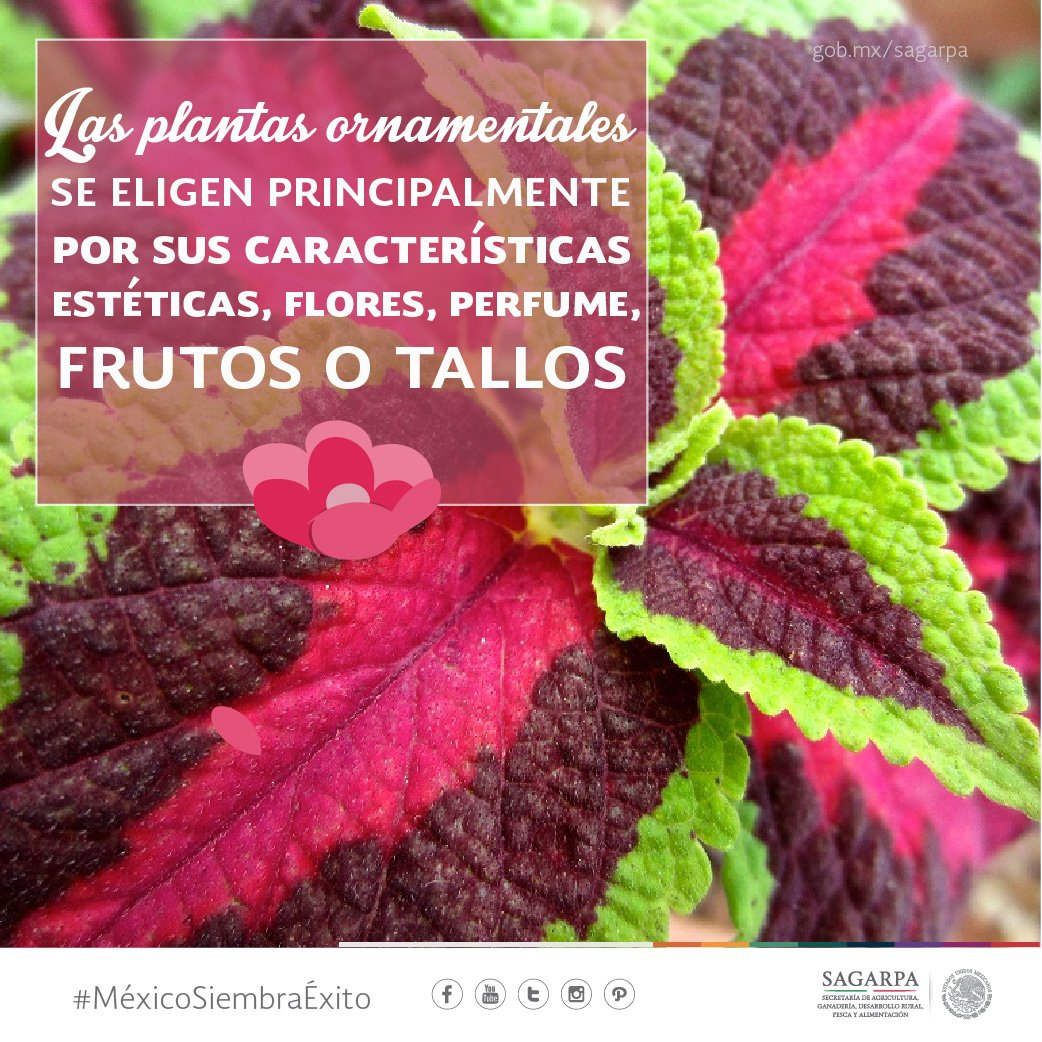 Una planta ornamental se cultiva y comercializa con for Una planta ornamental