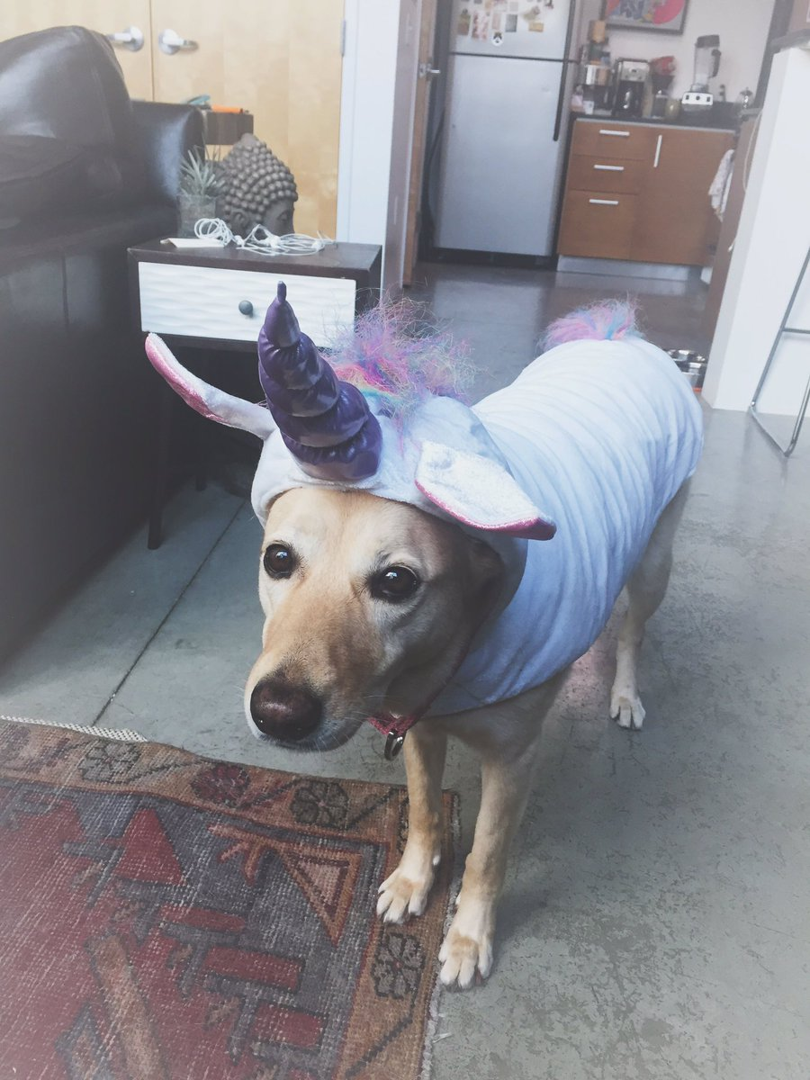 here's a couple pics of eevee in a unicorn outfit to calm ur election stress https://t.co/ZvCXQh40IW