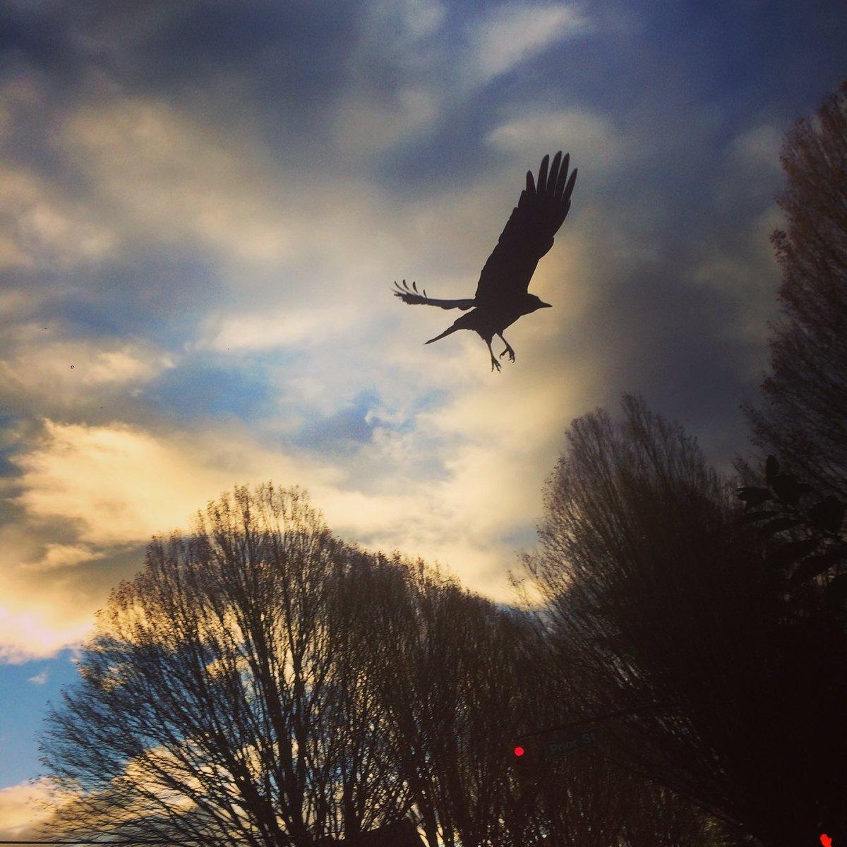 Fly away https://t.co/6YuqbJnj8T