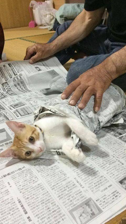 할아버지가 신문 보는걸 방해한 냥이의 최후 출처 : 트윗 @haaaaaaa___ https://t.co/tREg4Lnmef