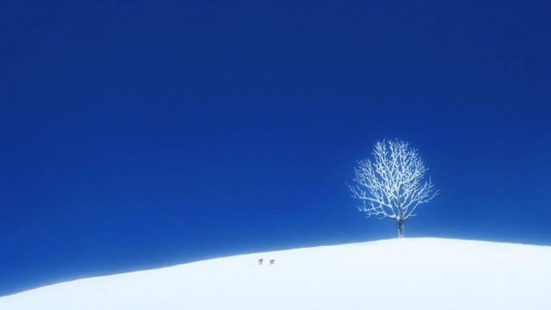 「#おおかみこどもの雨と雪」より。#映画で印象に残っている雪