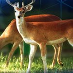 Officials suspect chronic wasting disease in Michigan deer